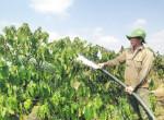 Giải pháp chống khô hạn cho cây ăn trái