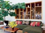 Các vị trí trồng cây phong thủy trong nhà thịnh vượng nhất