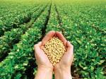Cách tăng năng suất đậu phộng