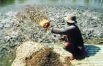 Cách nuôi cá bằng phế phẩm gia súc