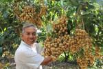 Kỹ thuật trồng và chăm sóc nhãn lồng bội thu