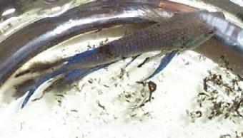 Cách chữa bệnh thối vây ở cá betta