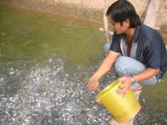Kỹ thuật chăm sóc và quản lý cá hương