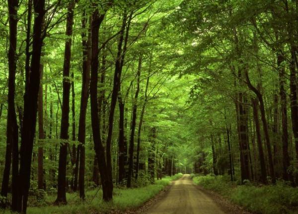Cây rừng