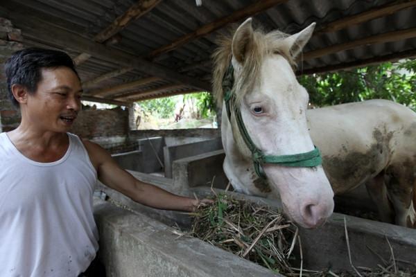 Ngựa cái