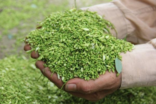 Áp dụng đúng kỹ thuật trồng cây, người dân sẽ thu lại hiệu quả kinh tế cao